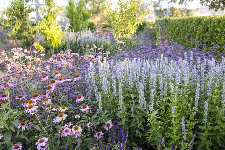Sunset Magazine's Test Garden — Homestead Design Collective