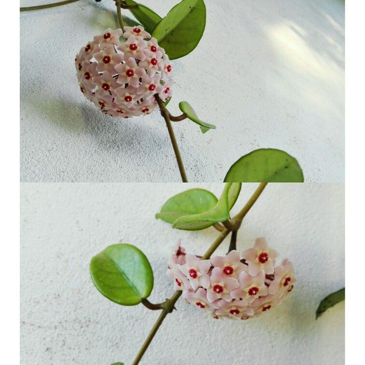 Strangers flowers, la flor de cera...