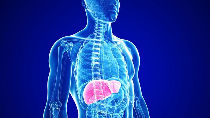 What can a Healthy Liver Do????