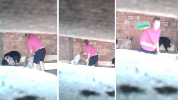 Animal rescuer filmed whipping dogs with a broom every day! Demand Punishment Now! | YouSignAnimals.org