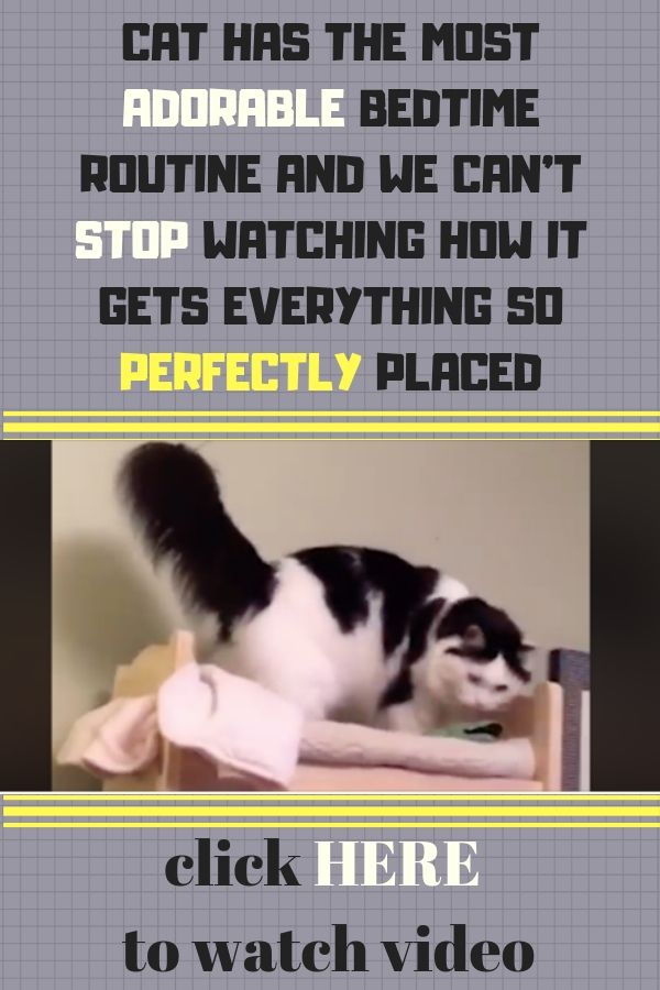 Cat Has The Most Adorable Bedtime Routine And We Can T Stop Watching How It Gets Everything So Perfectly Placed Animais De Estimacao Animais E Estimacao