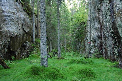 Ville Svartdalen - Østmarka på sitt beste!