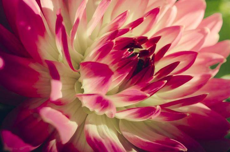 Cómo cuidar las plantas en primavera - http://www.jardineriaon.com/como-cuidar-las-plantas-en-primavera.html