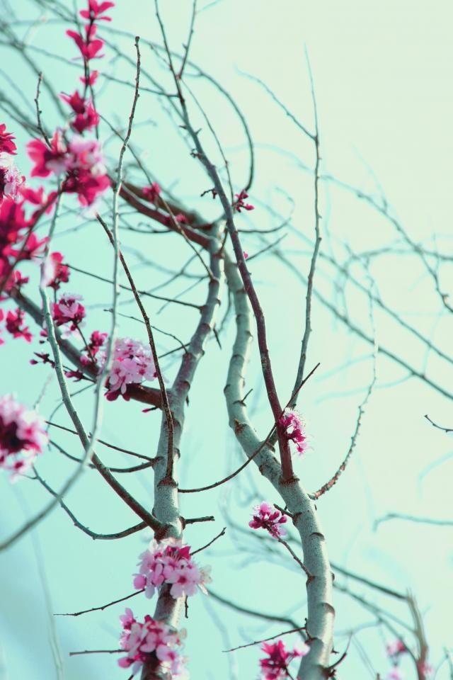 #bloemen
