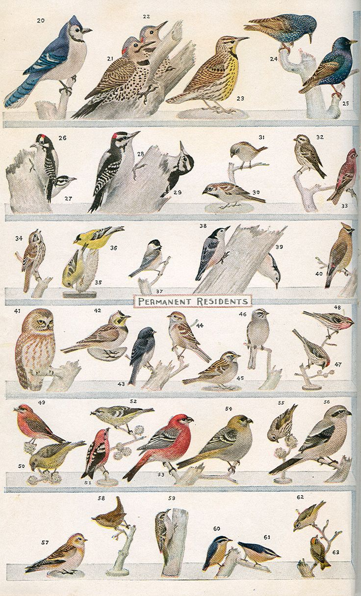 What Bird is That?,by Frank Chapman, 1920.  A pocket Museum of Land Birds of the Eastern US arranged according to Season. (882×1456)