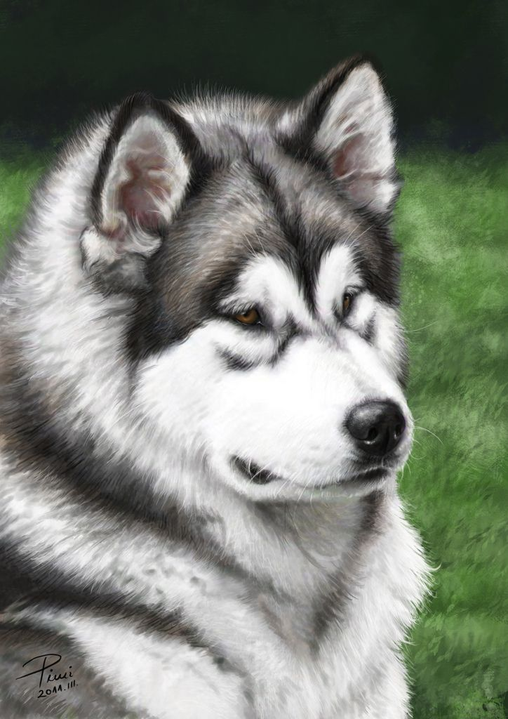 malamute portrait digital painting | digital painting in pho… | Flickr