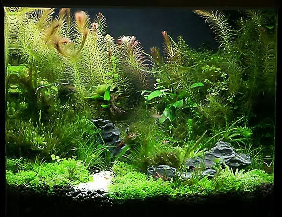 570 best Wasserwelten images on Pinterest Aquariums, Fish - deko fur aquarium selber machen