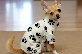 Paw Print Pajamas for Chihuahua