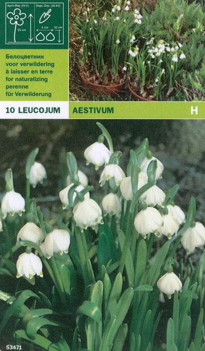 Sommarsnöklocka:   (Leucojum Aestivum)   Får en blomstängel med 3-7 vita blommor med en grön fläck på varje blomblad. Fin på lite fuktiga platser, tex. vid en damm eller i glest gräs. Vill ha en väldränerad men fuktighetshållande jord. Härdig i stora delar av landet. Brukar lämnas i fred av rådjur, kaniner och harar. Blir ca. 10 cm hög. Lökstorlek 8/+. 10 lökar.