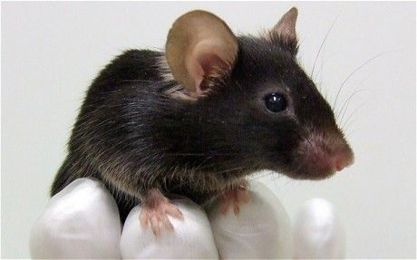 Mice trained for airport security