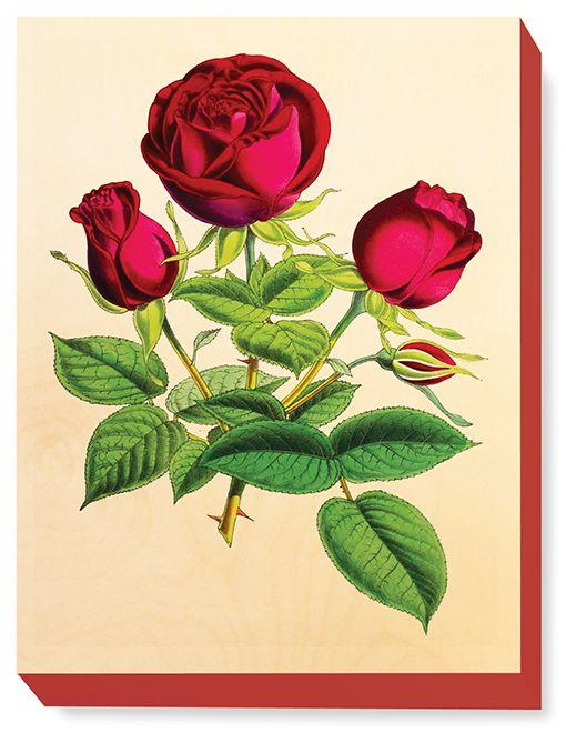 FLW 038 Vintage Flower Tea Rose