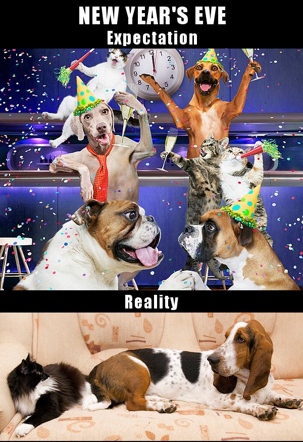 Cats and dogs on New Year's Eve.