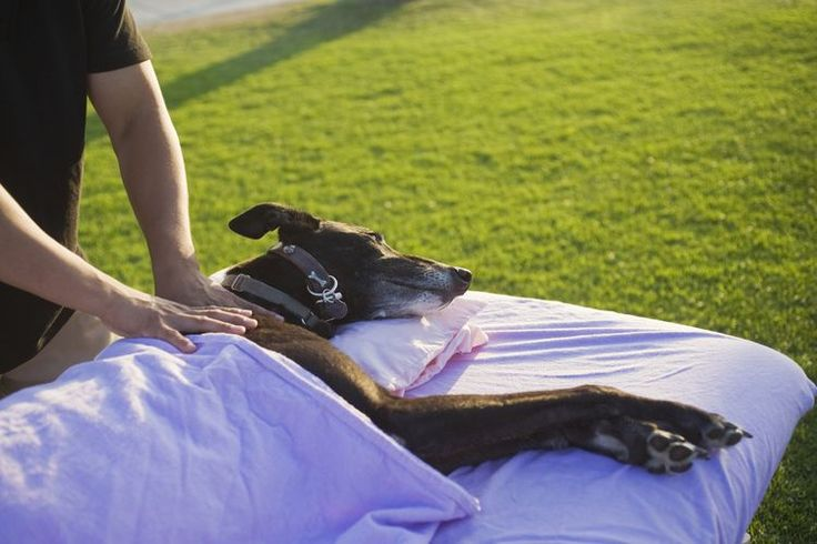 Animal Massage Therapist Job Description Salary, Skills