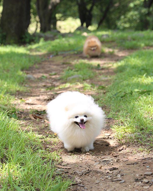 Miniş köpekleri sevdiğim için