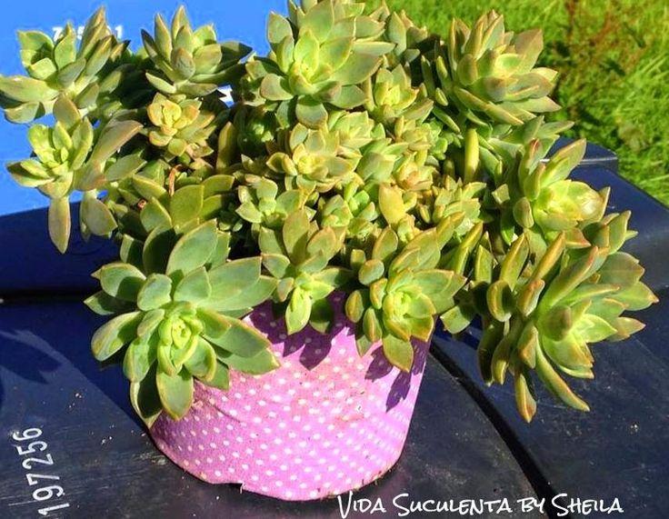 17 best images about cactus on pinterest yogurt recetas - Como transplantar cactus ...