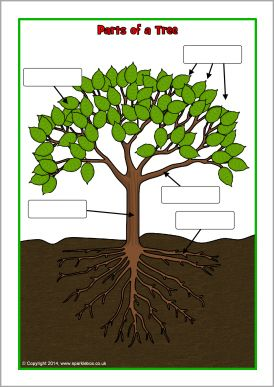Parts of a tree poster/worksheet (SB10351) - SparkleBox