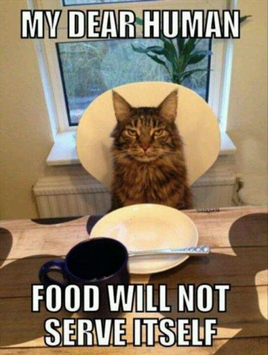Cats #lolcats #lol #lulz #lmao #funny #humor #cats #kittens #animals #kitten #meme #memebase #grumpycat #cat shaming #lolcat #cat