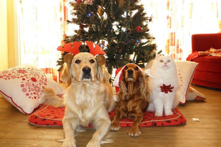 Things pet owners should be careful of during the festive season.  Lulu & Robbie Blog