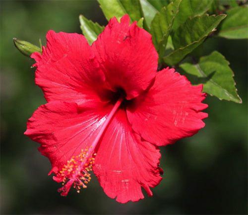 Kayley Flowernames Of Flowers Flower Wallpaper Free