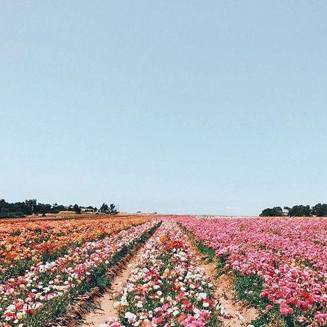 floral views.