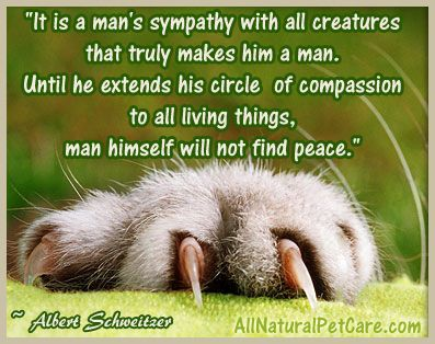 Animal Cruelty Quotes Inspiration 152 Best Quotes Images On Pinterest  Animal Rescue Animal Rights