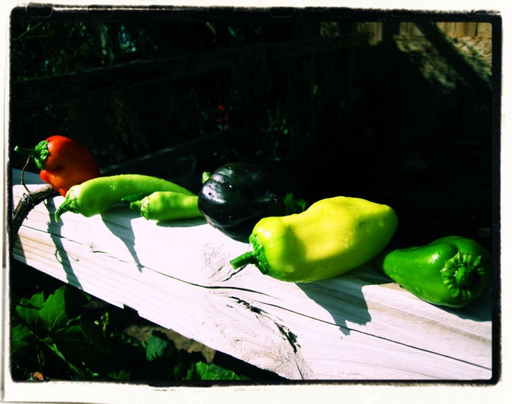 Banana peppers, cerrano peppers, purple bell peppers..... Needless to say peppers do really well in the desert!
