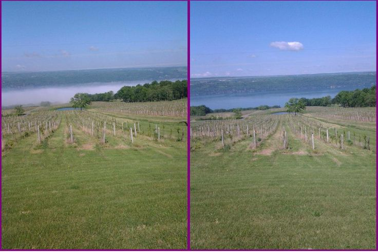 Mother Nature and the beauty of Seneca Lake never ceases to amaze us! Check out the lake this morning, started off fog covered and a mere couple of hours later, it reappears. It is going to be a beautiful weekend in the Finger Lakes! Chateau Lafayette Reneau #senecalake #fingerlakes #clrwine