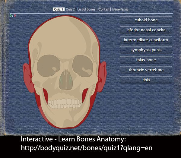 Matching Game: 206 Bones of the Body | Easy Notecards