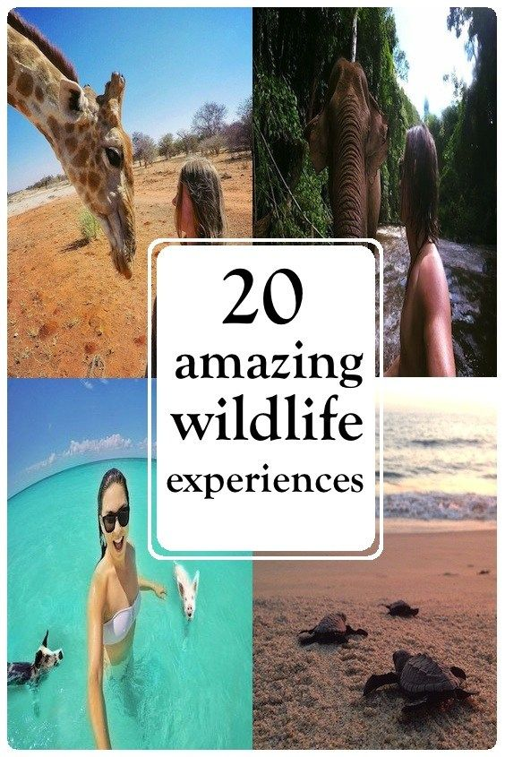 20 amazing wildlife experiences