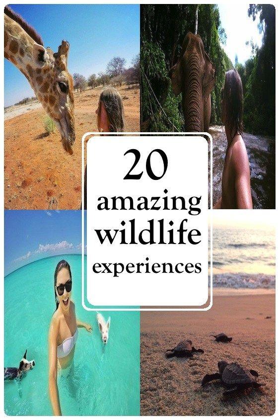 20 amazing wildlife experiences