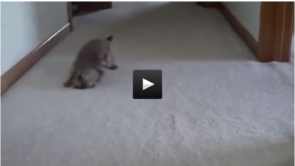 183 Best Images About Videos On Pinterest Cats Donkeys