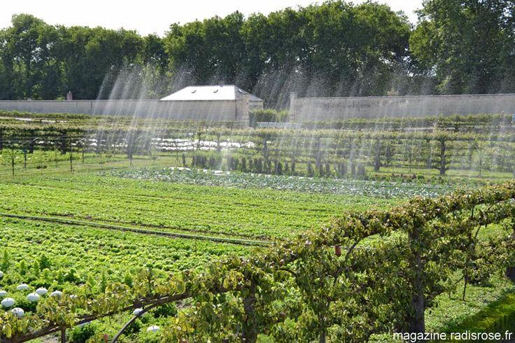 Le Potager du Roi à Versailles - radis rose http://radisrose.fr/le-potager-du-roi-versailles/ #potager #versailles