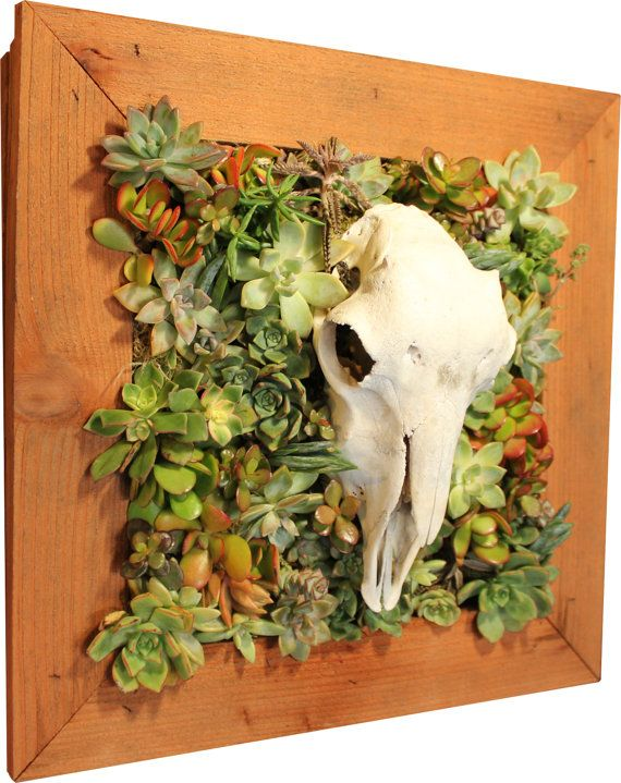 Handmade Vertical Succulent Living Wall With White Tail Deer Skull And Living  Succulents.