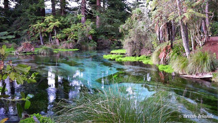 Hamurana Spring à #Rotorua et ses eaux cristallines   http://www.breizh-zelande.fr/rotorua-lacs-fumerolles-odeur-oeuf-pourri/