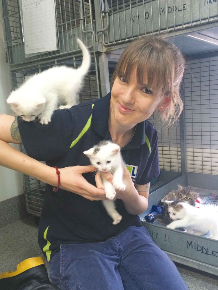 With a rise in kittens and new mums at the shelter, The Animal Welfare League is asking people to open their homes and hearts and become a volunteer foster carer. Melanie from the Animal Welfare League with kittens that need a foster home. Like us on Facebook at 'The Weekender Herald' and read more online at http://adelaidehills.realviewtechnologies.com/