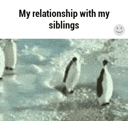 relationship with my siblings gif - Google Search