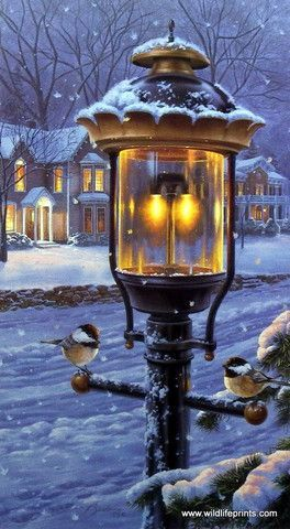 A pair of chickadees find warmth under a nostalgic street lamp on a cold winter evening. Black-capped chickadees do not migrate and are found mainly in Alaska, Canada, and the Northern U.S. They are c