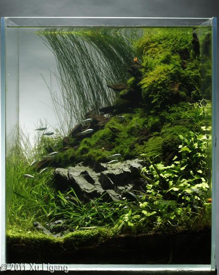 beautiful small vertical tank  terrarium  fish tank  or both  sandwiched layers could make it a