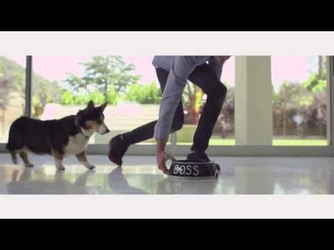 """""""Purina Party Poppers"""" Commercial/Music Video (All day I get bacon baby), hilarious!  No acting needed, this Corgi was just being himself!"""
