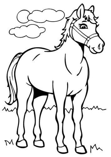 337 ausmalbilder pferde zum ausdruck - kostenlose