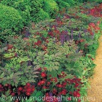 Border piet oudolf de tuin het terras en het balkon for Designing with plants oudolf