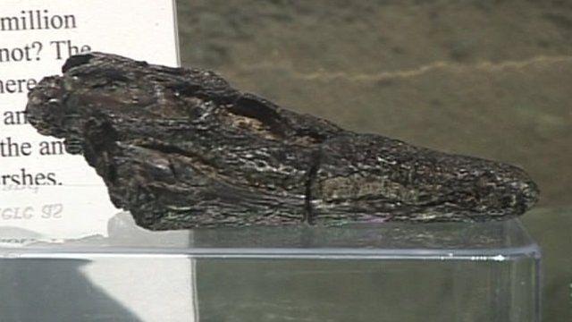 BBC News - Skull fragments reveal new ancient crocodile species