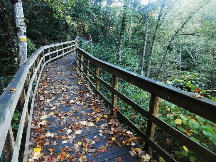 1000 Lugares en Galicia: Pasarelas del Cañón del Río Mao, en Parada de Sil....