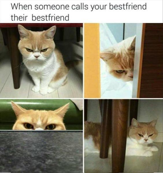 Friendship Quotes Cats: 1000+ Funny Weird Quotes On Pinterest