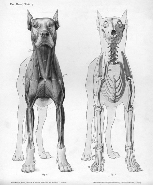 dog anatomy.