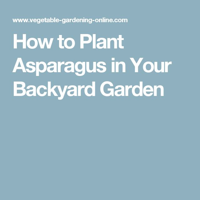 How to Plant Asparagus in Your Backyard Garden