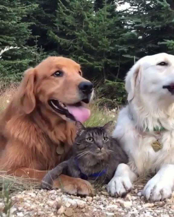 Cat is stuck between two loving doggo's 😍❤️