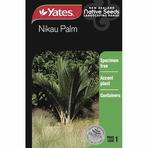 Seed Nikau Palm  Native