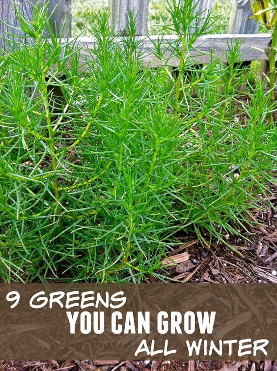 Don't put your gardening on hold during the winter months. Thanks to this guide from The Prairie Homestead, learn about these nine greens that you can grow during the cold months. Click in to start your winter gardening.