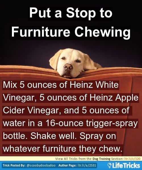 Mix 5 ounces of Heinz White Vinegar, 5 ounces of Heinz Apple Cider Vinegar, and 5 ounces of water in a 16-ounce trigger-spray bottle. Shake well. Spray on whatever furniture they chew.
